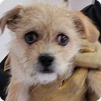 Adopt A Pet :: Kizzy - Greeley, CO