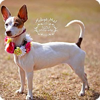 Adopt A Pet :: Ariel - Fort Valley, GA