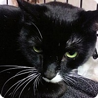 Adopt A Pet :: Cola - Lunenburg, MA