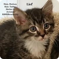 Adopt A Pet :: Lief - Temecula, CA