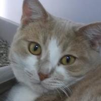 Adopt A Pet :: Dreezy 315-17 - Cumming, GA
