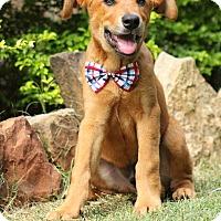 Adopt A Pet :: Westen - Bend, OR
