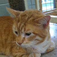 Adopt A Pet :: 653096 - Bakersfield, CA