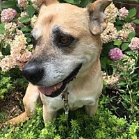 Adopt A Pet :: Daysie - Chester Springs, PA