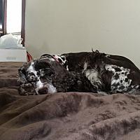 Adopt A Pet :: Jasmine 7yr - Mentor, OH