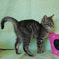 Adopt A Pet :: Delila - Muskegon, MI