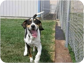 Coonhound (Unknown Type) Mix Dog for adoption in Meridian, Idaho - Dagwood