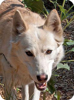 Alaskan Malamute Mix Dog for adoption in Boise, Idaho - MIA