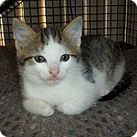Adopt A Pet :: Zek - Acme, PA
