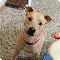 Adopt A Pet :: Dexter - Indianapolis, IN