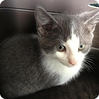 Adopt A Pet :: Ava - Hamilton, ON