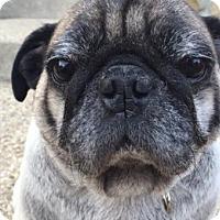 Adopt A Pet :: Franklin - Pismo Beach, CA