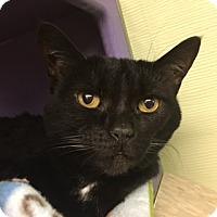 Adopt A Pet :: Gracie - Medina, OH
