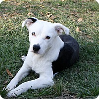 Adopt A Pet :: Runner! - Sacramento, CA