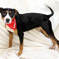 Hound (Unknown Type) Mix Dog for adoption in Dalton, Georgia - Gypsy