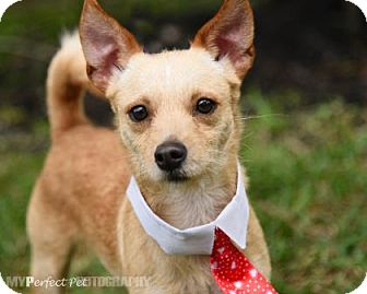 Jack Russell Terrier Mix Dog for adoption in Miami, Florida - Elih