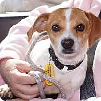 Adopt A Pet :: Linze - Avon, NY