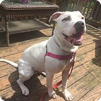 Adopt A Pet :: Nick - Baltimore, MD
