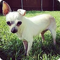 Adopt A Pet :: Callie - AUSTIN, TX
