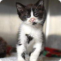 Adopt A Pet :: Sugar - Gulfport, MS