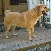 Adopt A Pet :: Pearl - Windham, NH
