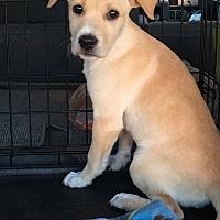 Adopt A Pet :: Keno - Phoenix, AZ