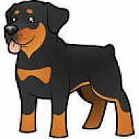 Adopt A Pet :: URGENT on 8/23 SAN BERNARDINO - San Bernardino, CA
