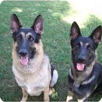 Adopt A Pet :: Madeline - Ridgeland, SC