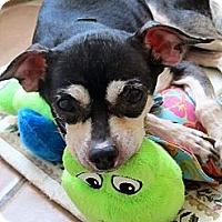 Adopt A Pet :: Blankie - Plainview, NY