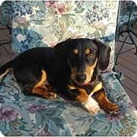 Adopt A Pet :: Butch #2201 - San Jose, CA