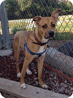 Terrier (Unknown Type, Medium) Mix Dog for adoption in Alliance, Nebraska - Krisco