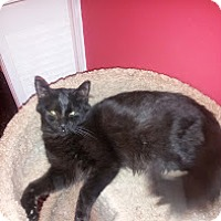 Adopt A Pet :: Arlo - Brooklyn, NY