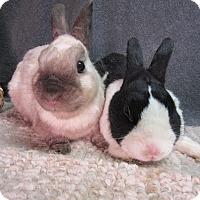 Adopt A Pet :: Rocky & Bullwinkle - Newport, DE