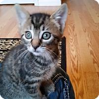 Adopt A Pet :: Kennedy - Turnersville, NJ