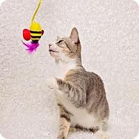 Adopt A Pet :: Tara - Chicago, IL
