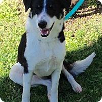 Adopt A Pet :: ROSE MARIE - San Pedro, CA
