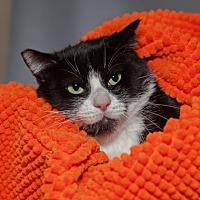Adopt A Pet :: Mister J - Mission Hills, CA