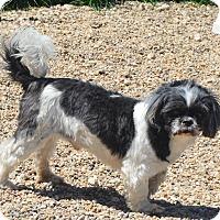 Adopt A Pet :: Brackett - Prole, IA