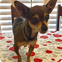 Adopt A Pet :: Gidget - Santa Ana, CA