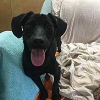 Adopt A Pet :: 'TINA' - Agoura Hills, CA
