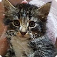 Adopt A Pet :: Thor G - Trevose, PA