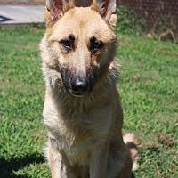Adopt A Pet :: Sandi - Poughkeepsie, NY