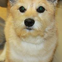 Adopt A Pet :: MAYA - Clayton, NJ