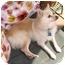 Photo 2 - Pomeranian Mix Dog for adoption in Los Angeles, California - Lucy