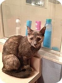 Calico Cat for adoption in Tampa, Florida - Mia