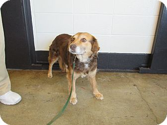 Border Collie Mix Dog for adoption in LaGrange, Kentucky - SANDY