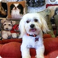 Adopt A Pet :: Biscuit - Goleta, CA