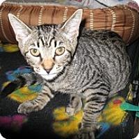 Adopt A Pet :: Otter - Shelton, WA