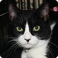 Adopt A Pet :: Tammy (MP) - Little Falls, NJ