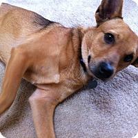 Adopt A Pet :: Dasher - Homewood, AL